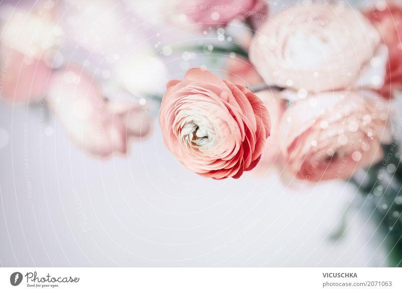 Pastell floral Hintergrund mit schönen Blumen Natur Pflanze Blatt Leben Blüte Liebe Gefühle Hintergrundbild Stil Feste & Feiern rosa Design elegant