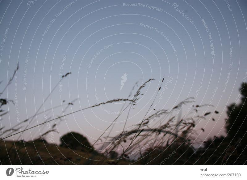 die schönsten stunden Natur Sommer Gras Landschaft Stimmung natürlich Sträucher Nachthimmel Blauer Himmel Farn Gefühle Sommerabend Sommernacht