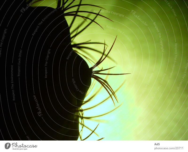Kaktus im Gegenlicht 2 Pflanze Makroaufnahme Stachel