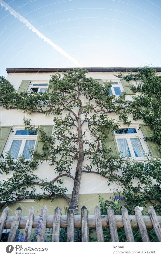 Baumhaus Häusliches Leben Garten Natur Pflanze Himmel Sommer Schönes Wetter Ast Dorf Haus Einfamilienhaus Fassade Fenster Gartenzaun Wachstum außergewöhnlich