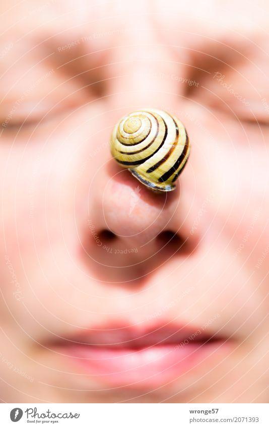 Nasenschneck II Mensch feminin Frau Erwachsene Weiblicher Senior Gesicht 1 45-60 Jahre Tier Wildtier Schnecke klein gelb rosa schwarz Auge Mund Hochformat