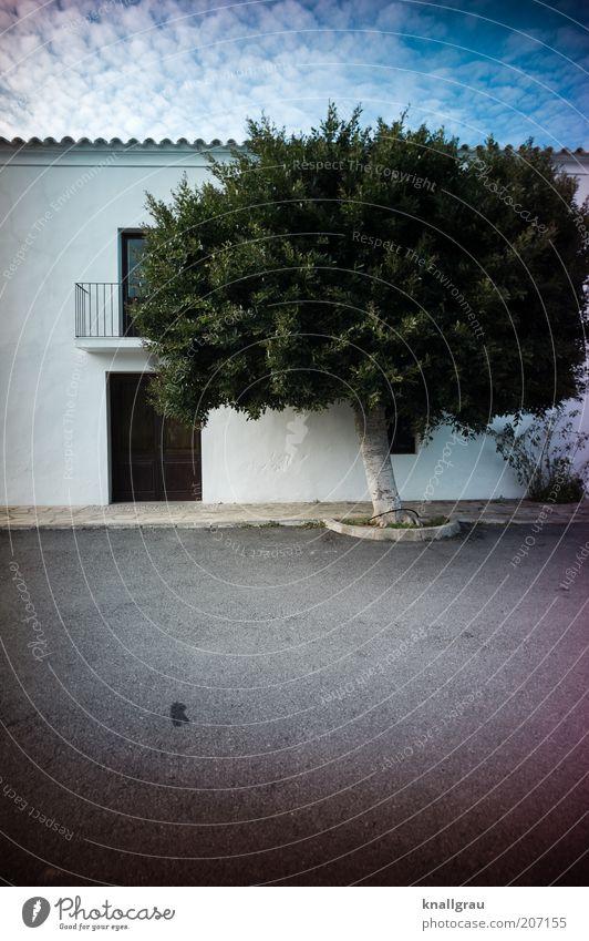 Baumhaus Natur alt Himmel weiß Baum Pflanze Sommer Ferien & Urlaub & Reisen Haus Stein Tür Wind Platz Reisefotografie einfach Asphalt