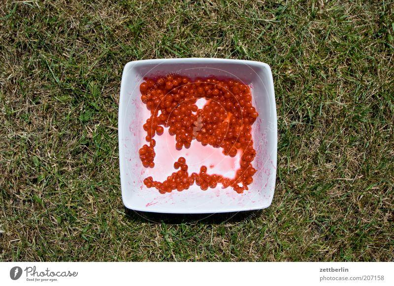 Johannisbeeren Gras Rasen Sportrasen Beeren Frucht Schalen & Schüsseln Behälter u. Gefäße Sommer rot Textfreiraum Geschirr Ernährung süß Gesundheit grün weiß