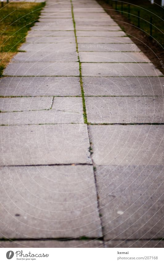 Platte(r) Weg Moos Menschenleer Straße Wege & Pfade Bürgersteig einfach Ordnung kaputt trist Farbfoto Gedeckte Farben Außenaufnahme Textfreiraum unten