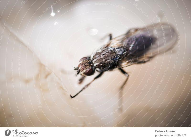 Ich steh auf Quallen Natur Wasser Tier dunkel Beine hell Fliege Umwelt Flügel Wildtier durchsichtig Ekel