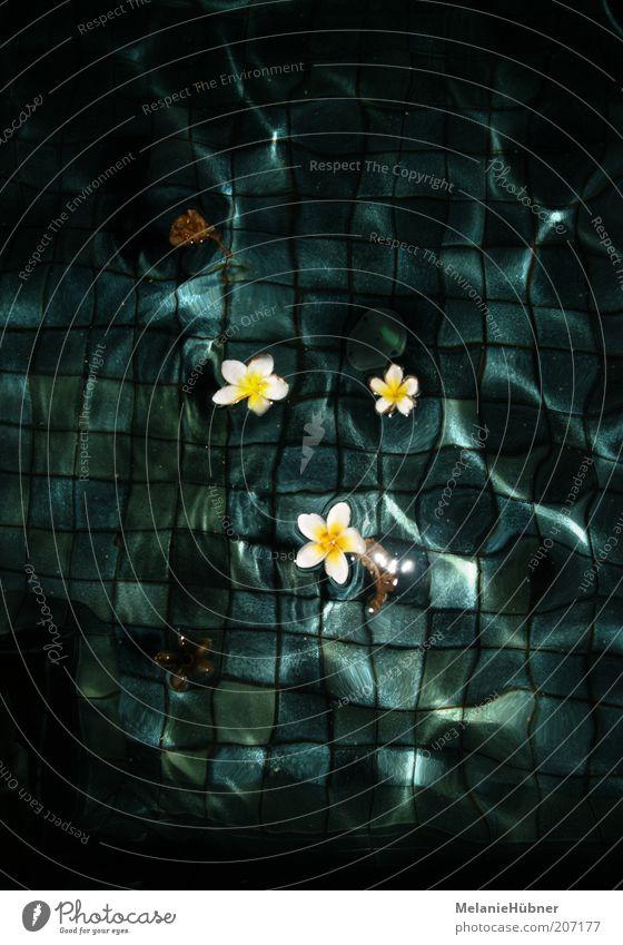 Frangipani Stil schön Wellness Umwelt Pflanze Wasser Blüte exotisch nass blau gelb grün weiß Gefühle Stimmung Glück Zufriedenheit Farbfoto Außenaufnahme