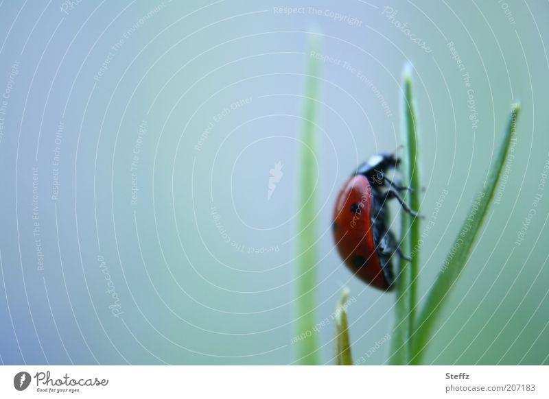 nach oben krabbeln.. Natur Bewegung Gras Textfreiraum Erfolg Ziel festhalten Insekt Halm aufwärts Optimismus Käfer aufsteigen Fortschritt Marienkäfer