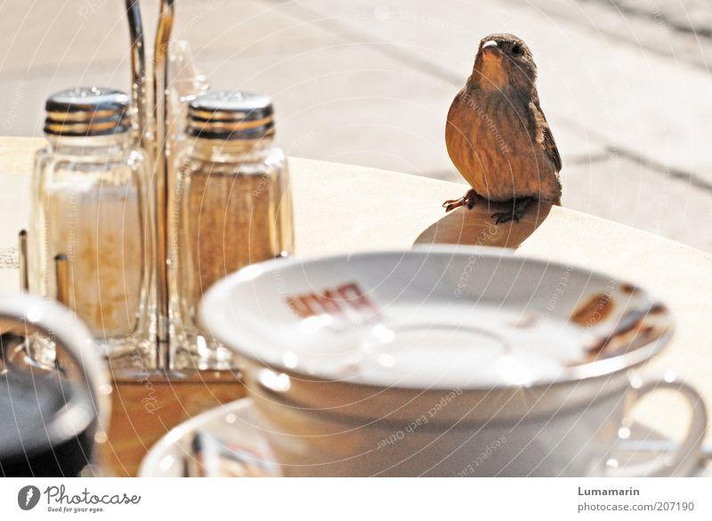 Herr Ober schön Tier Stimmung braun Vogel warten lustig klein sitzen Tisch Fröhlichkeit nah Vertrauen Gastronomie Freundschaft Neugier