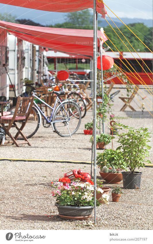 im Vorplatz sind noch Plätze frei [FR 6/10] Ferien & Urlaub & Reisen Blume Sommer ruhig Erholung Freiheit Garten Freizeit & Hobby Fahrrad Platz Tourismus Lifestyle Häusliches Leben Dach Schnur Camping