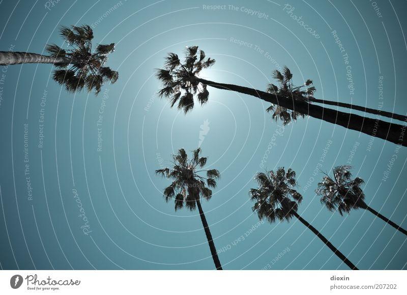 Unter Palmen (2) Sommer Sommerurlaub Natur Himmel Wolkenloser Himmel Sonne Sonnenlicht Klima Wetter Schönes Wetter Pflanze exotisch Palmenwedel leuchten