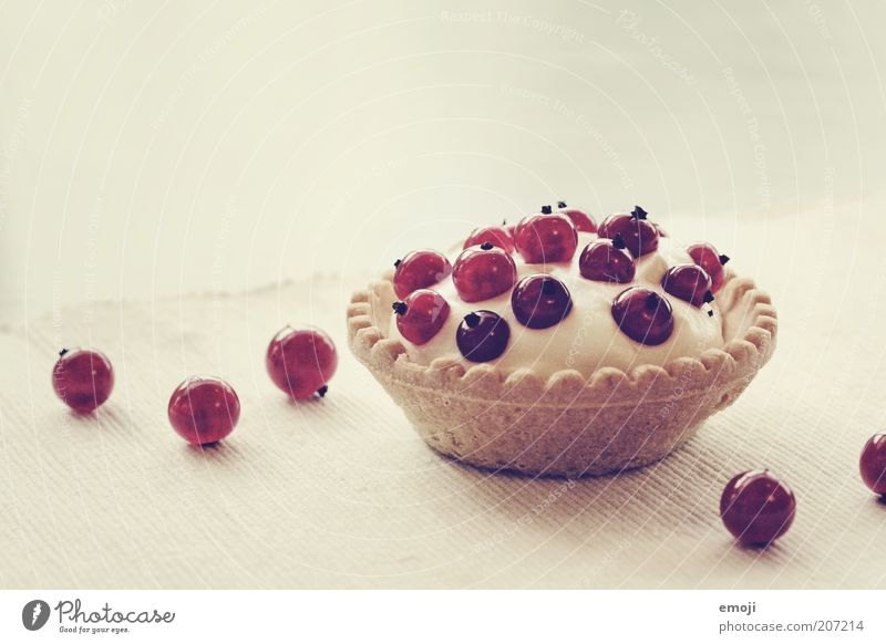 Törtchen weiß rot klein Kuchen Frucht süß rund Torte lecker Appetit & Hunger Backwaren Beeren Dessert Johannisbeeren Törtchen