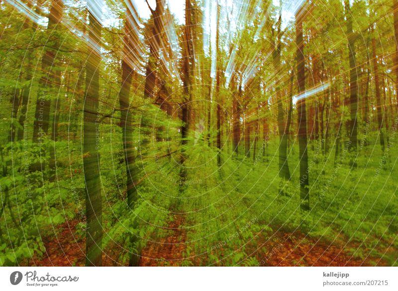 in brandenburg Umwelt Natur Landschaft Pflanze Erde Frühling Klima Baum Sträucher Moos Grünpflanze Wildpflanze Wald Bewegung Wachstum grün Farbfoto
