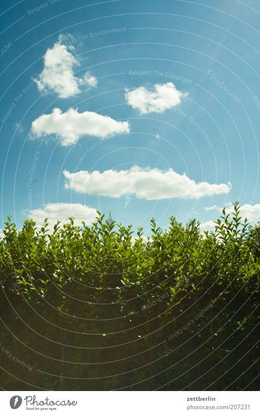 Sommer 2010 Hecke Himmel Wolken Nachbar Grenze Zaun Begrenzung Sichtschutz Liguster grün Blatt Blattgrün Frühling Blauer Himmel Schönes Wetter Sträucher