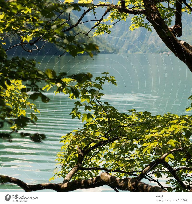 grün bis türkis Natur Wasser Baum grün Sommer Ferien & Urlaub & Reisen ruhig Blatt Erholung Berge u. Gebirge Frühling Freiheit See Wellen Deutschland