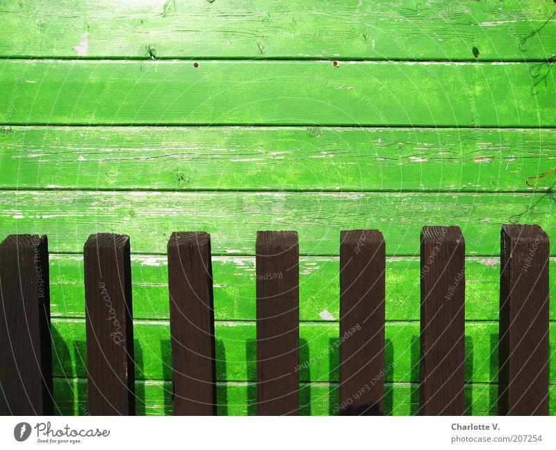 Bretter-Hecke alt grün Garten Holz Linie braun einfach verfallen Holzbrett Maserung abblättern Holzwand liniert Holzzaun Bretterzaun