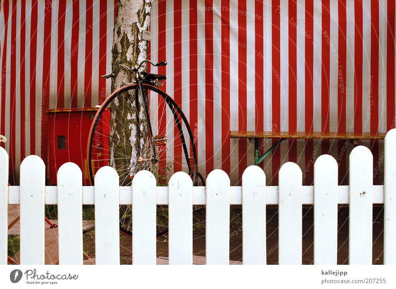 ein rad alt weiß rot Ferien & Urlaub & Reisen Stil Kunst Fahrrad elegant Ausflug Lifestyle Streifen Show retro Bank Kultur Zaun