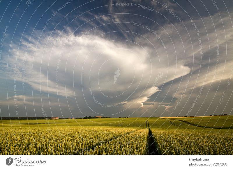 endlich Regen! Getreide Sommer Landschaft Gewitterwolken Nutzpflanze Feld bedrohlich Unendlichkeit Wärme blau gelb grün Einsamkeit Horizont Klima Stimmung