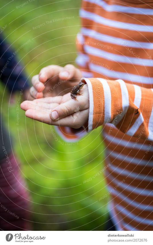 Laubfrosch Kind Natur Landschaft Tier Freude Wald Umwelt Wiese Spielen Garten See Kindheit Wildtier Abenteuer lernen Bildung