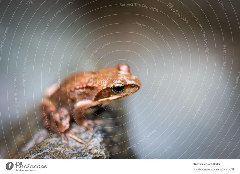Frosch Umwelt Natur Landschaft Tier Frühling Sommer Wald Bach Nutztier Wildtier 1 Laubfrosch Farbfoto Gedeckte Farben Außenaufnahme Tag Schwache Tiefenschärfe