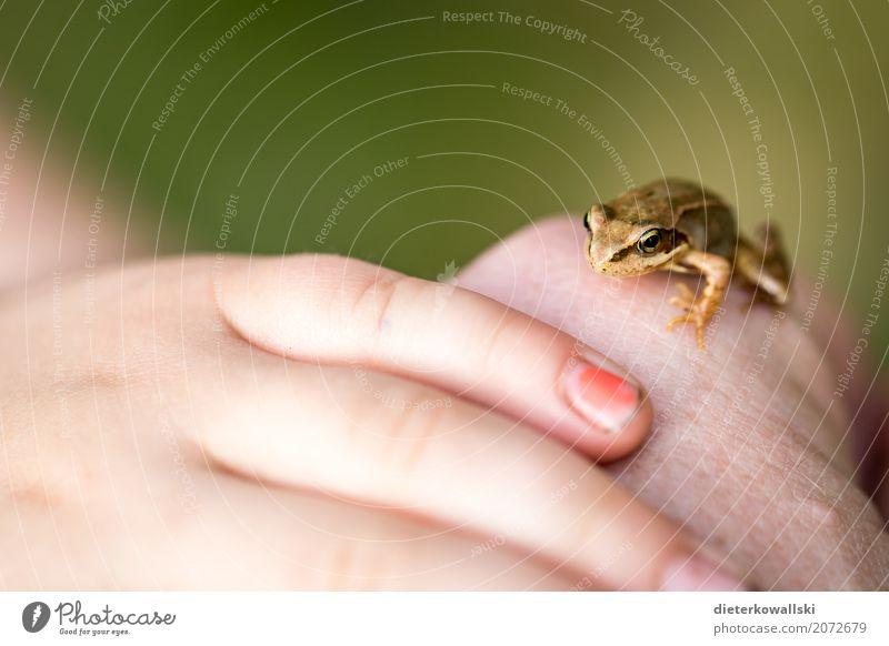 Frosch Kind Natur Sommer schön Landschaft Tier Freude Wald Umwelt Frühling Wiese Spielen Garten Wildtier lernen Umweltschutz
