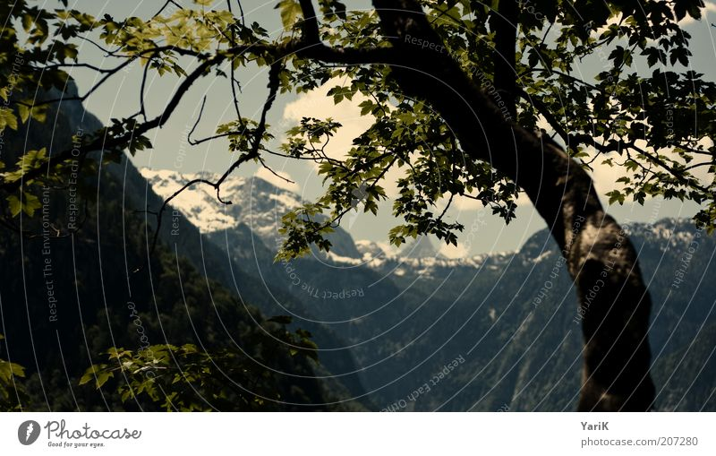im blickfeld Berge u. Gebirge ruhig Erholung Baum grün Freizeit & Hobby Natur Bayern Deutschland Alpen Gegenlicht Schlagschatten Ferien & Urlaub & Reisen