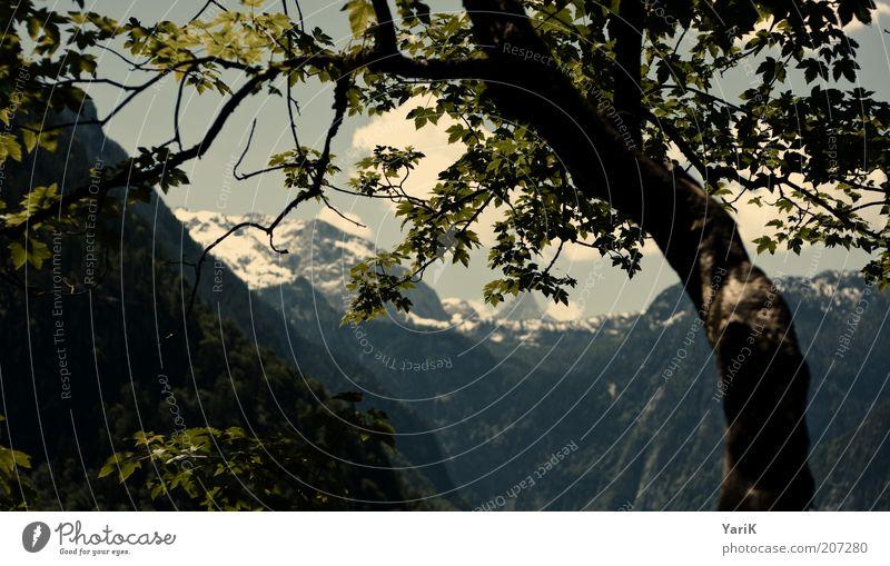 im blickfeld Natur Baum grün Sommer Ferien & Urlaub & Reisen ruhig Erholung Berge u. Gebirge Freiheit Luft Deutschland frei Aussicht Freizeit & Hobby Alpen