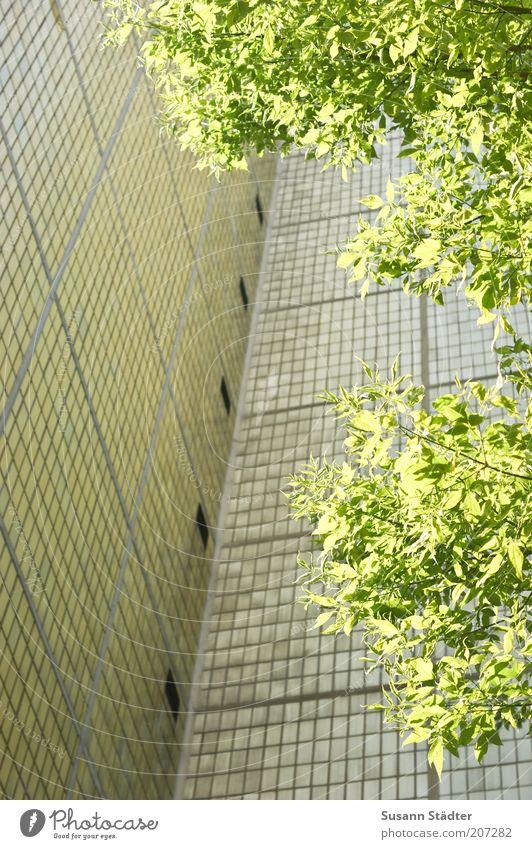 grüner Zweig im Plattenhimmel Baum Haus Wand hell Umwelt Hochhaus Fassade Fliesen u. Kacheln Plattenbau Bildausschnitt Wohnhochhaus Fassadenverkleidung