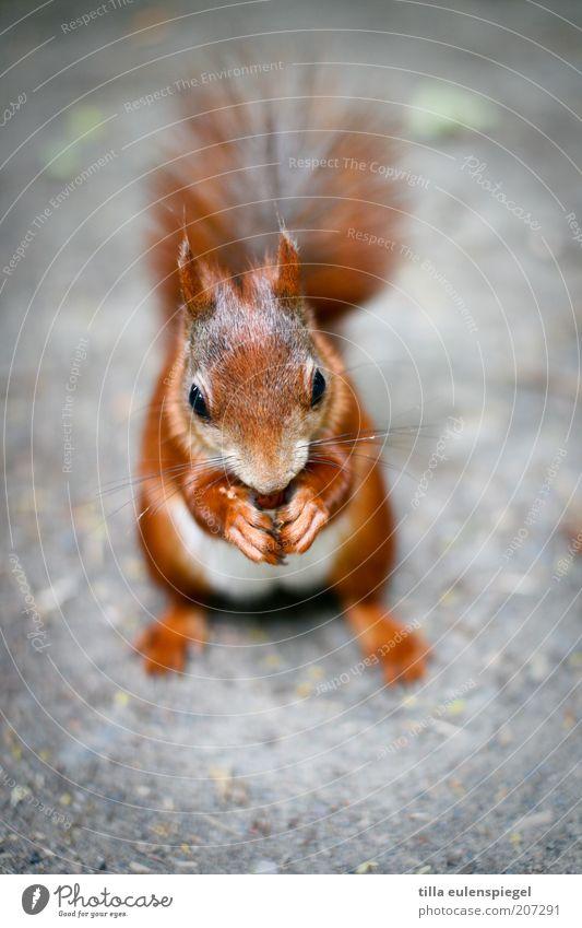 was süßes gefällig? Natur schön ruhig Auge Ernährung Tier Zufriedenheit braun klein Umwelt sitzen authentisch Tiergesicht natürlich festhalten Wildtier