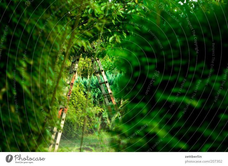 Bambus, Kirsche, Konifere grün Pflanze ruhig Garten geheimnisvoll Leiter Tiefenschärfe Hecke Durchblick Textfreiraum Schrebergarten Blattgrün Kleingartenkolonie