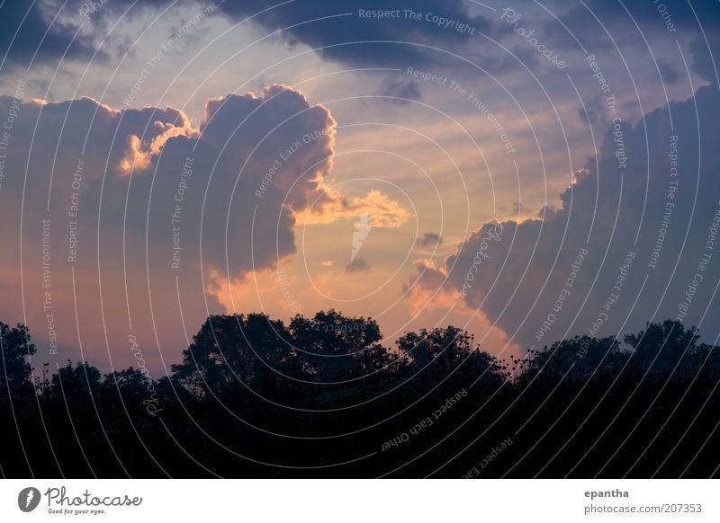 Natur schön Himmel Baum Wolken Landschaft orange Wetter Horizont ästhetisch Klima natürlich Gewitter Unwetter Abenddämmerung
