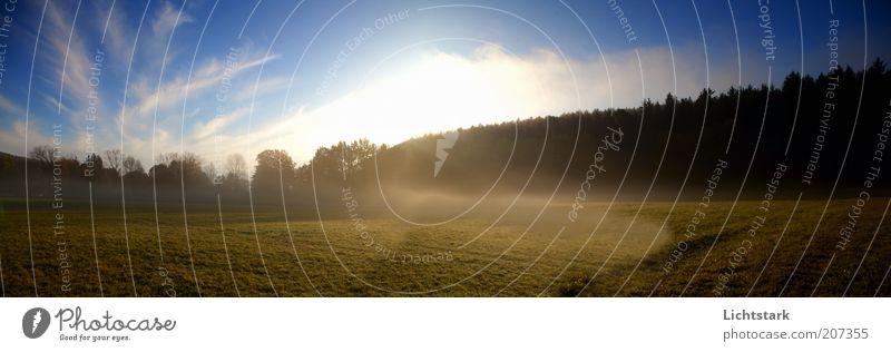 träume doch harmonisch Wohlgefühl ruhig Duft Ausflug Freiheit Expedition Sonne Landschaft Pflanze Erde Luft Himmel Wolken Sonnenlicht Baum Gras Feld Farbfoto