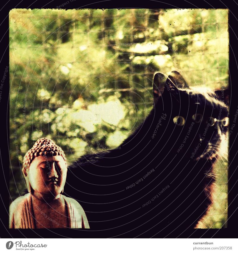 gottheiten grün schwarz Katze braun Fell Lomografie Skulptur heilig Idee Doppelbelichtung Religion & Glaube Götter Hauskatze Buddha Inspiration Experiment