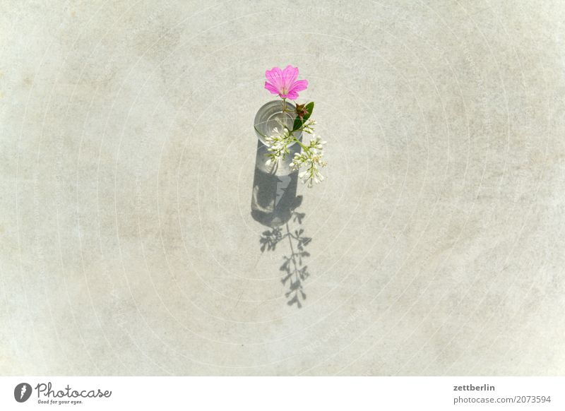 Blumen für alle Blühend Blüte Garten Menschenleer Textfreiraum Natur Pflanze Sommer Vase Glas Mädchen Tisch weiß rosa Vogelperspektive Licht Schatten Romantik