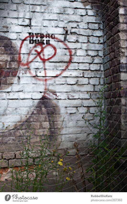 Schmuddelecke alt weiß Pflanze rot Sommer dunkel Wand grau Stein Mauer Graffiti braun dreckig Beton Fassade Schriftzeichen