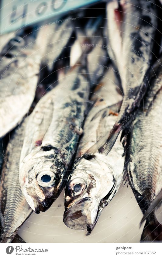 o schwarz Auge Ernährung Tier grau glänzend Lebensmittel Fisch Tiergesicht Fischauge Fischmarkt Marktstand Fischkopf Totes Tier