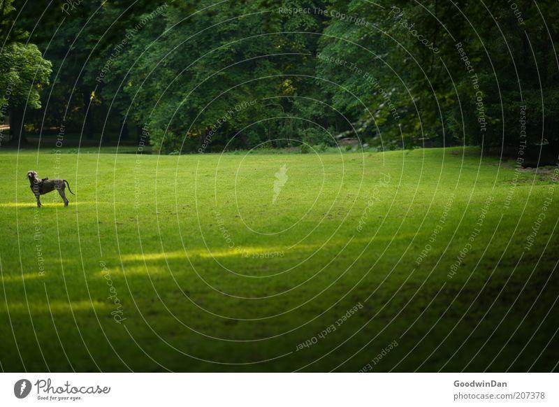 Dann hohl ich den Ball halt selbst.. Natur Baum grün Pflanze Sommer Tier Ferne Wiese Gefühle Frühling Hund Park Stimmung warten Umwelt authentisch