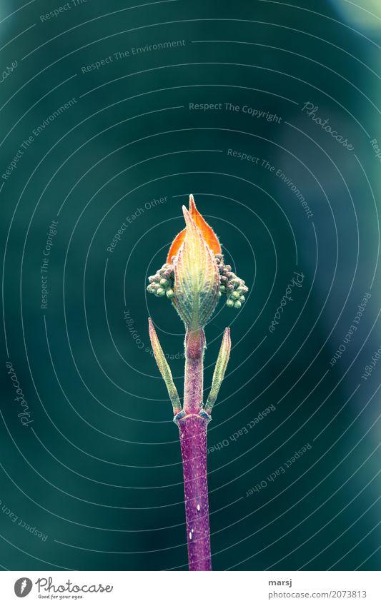 !Trash! 2017 | Frühstart ins neue Jahr Natur Pflanze Blütenknospen Hartriegel Stengel Blatt Kugel einzigartig natürlich dünn grün Geborgenheit Hoffnung Beginn