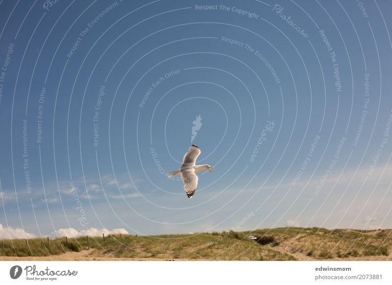 Möwe Himmel Natur Ferien & Urlaub & Reisen blau Sommer grün weiß Meer Tier Strand Freiheit grau fliegen oben wild Ausflug