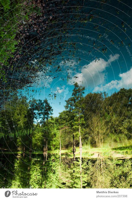 Ufer Wasser Baum grün Sommer Wolken Wald Gras See Umwelt Idylle Biologie Seeufer Moos bizarr Botanik Teich