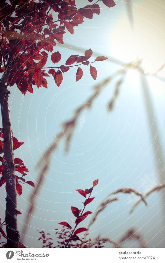 unterm Himmel Umwelt Natur Pflanze Wolkenloser Himmel Sonne Baum Sträucher heiß Wärme blau rot Glück Fröhlichkeit Zufriedenheit Lebensfreude China Sommer