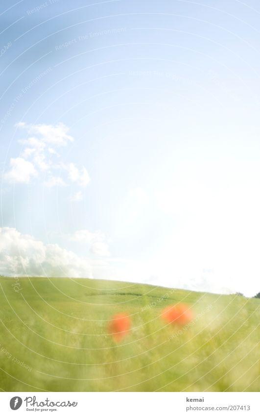 Sanfter Hügel Umwelt Natur Landschaft Pflanze Himmel Wolken Sonnenlicht Sommer Klima Schönes Wetter Wärme Gras Blüte Grünpflanze Wildpflanze Mohnblüte Feld