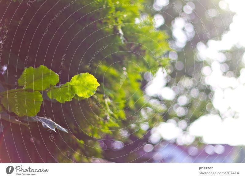 Sonnenlicht Himmel Natur grün schön Baum Pflanze Sommer Blatt Umwelt Frühling Park Wetter Klima außergewöhnlich Schönes Wetter