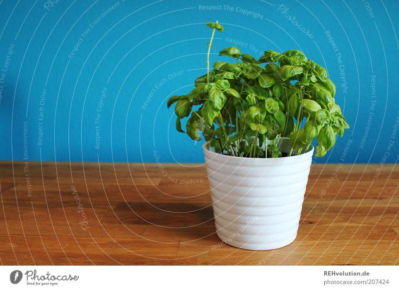 """""""Sehr liebensgewürzig!"""" Tisch Holz blau grün Basilikum Kräuter & Gewürze Pflanze Topfpflanze lecker geschmackvoll Wand einfach zyan natürlich ökologisch"""