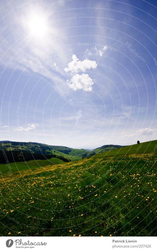 Sommerwiese Natur Himmel Sonne Blume grün blau Pflanze Sommer ruhig Wolken gelb Ferne Wiese Gras Freiheit Landschaft