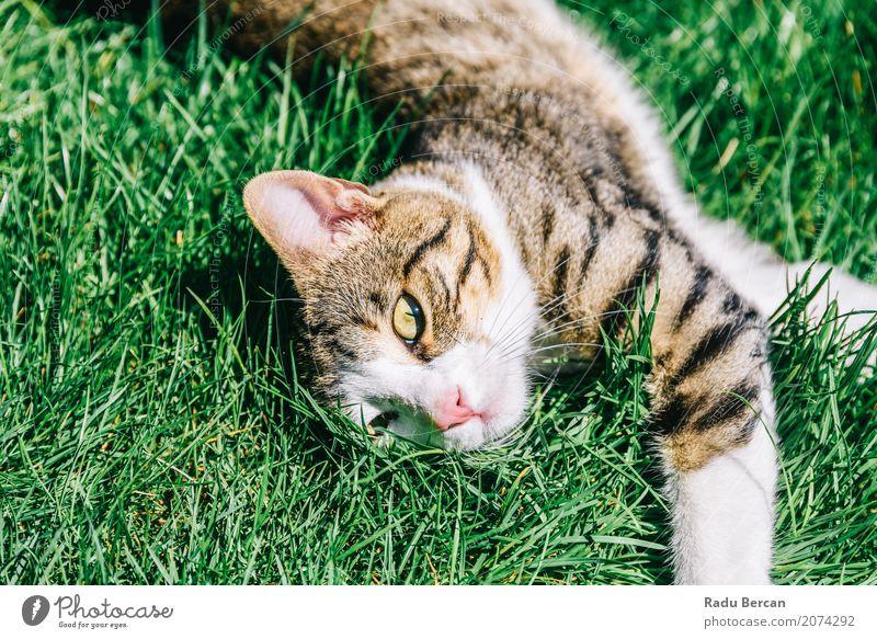 Katze Natur Sommer Farbe grün weiß Tier Wiese lustig Gras Spielen Glück Garten grau braun Fröhlichkeit