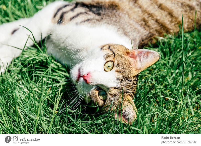 Katze Natur Pflanze Sommer Farbe grün weiß Tier Umwelt Gefühle Wiese lustig Gras klein Glück Garten