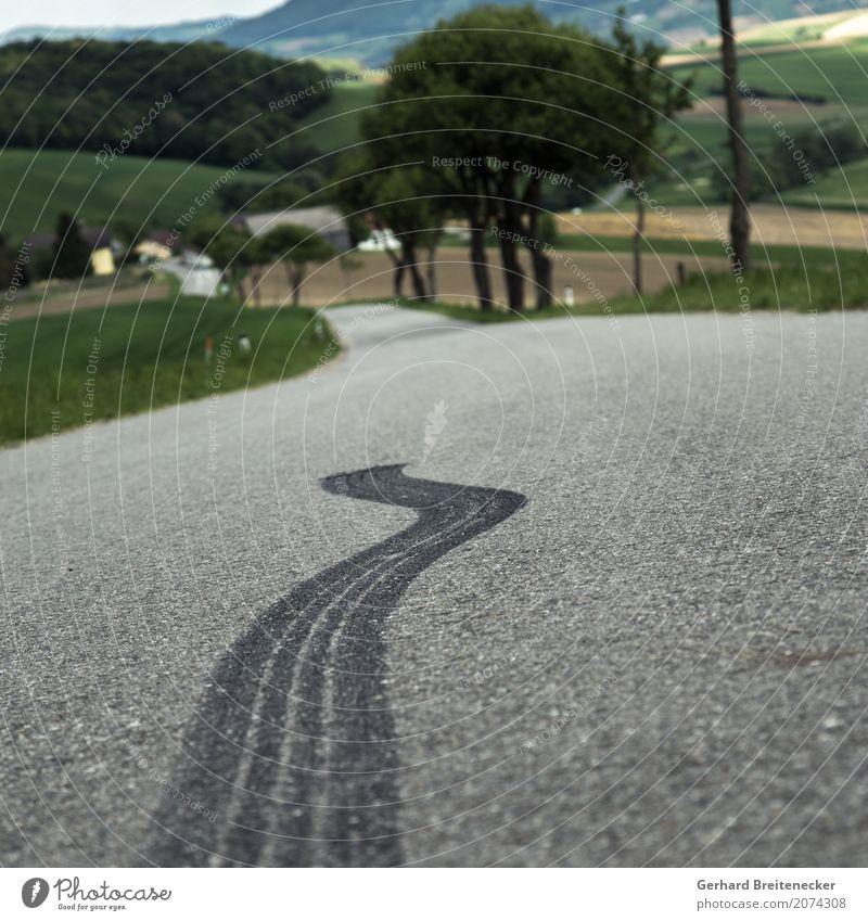Schlange Straße Tod Angst Verkehr PKW Geschwindigkeit Todesangst fahren Autofahren Aggression Motorsport