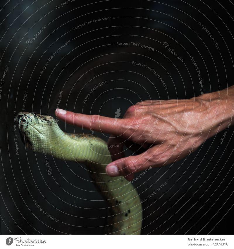 Schlangen Hand Finger Tier Willensstärke Vertrauen gefährlich Kontrolle Mut Galerie Farbfoto Textfreiraum oben Hintergrund neutral Schwache Tiefenschärfe Totale