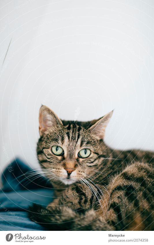 Katze Natur Einsamkeit Tier Haustier