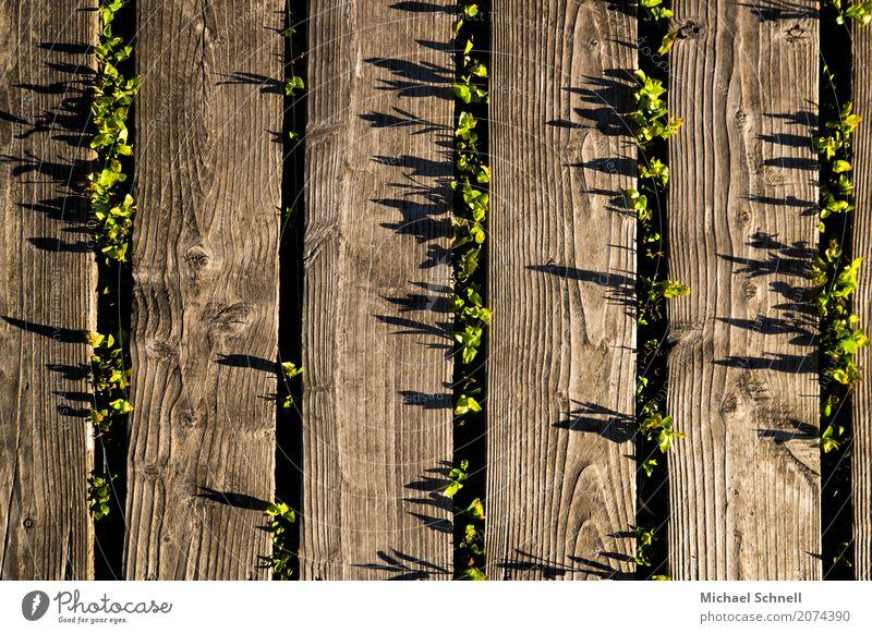 Brettpflanzenschatten Umwelt Natur Pflanze Gras Sträucher Moor Sumpf Erfolg braun grün Umweltschutz einrichten Hohes Venn Farbfoto Außenaufnahme Menschenleer